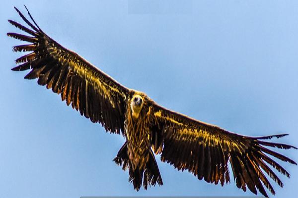 दोलखाको आकासमा प्रकृतिसँग रमाउँदै चिल, (फोटो फिचर)